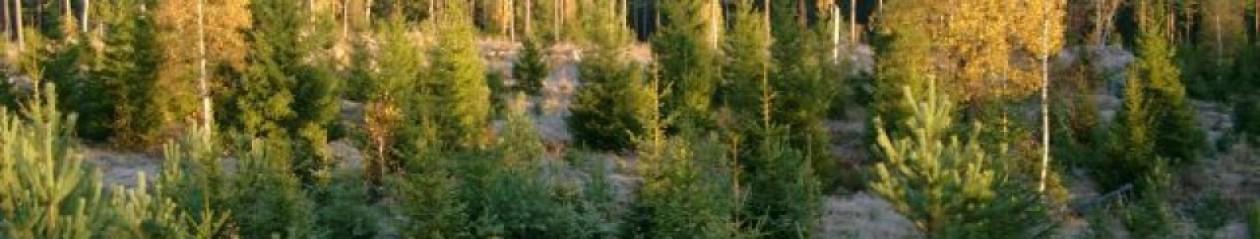 taso.se Tångeråsa Älg/Kronhjorts skötselområde